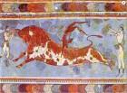 toro cretese